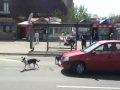 Psia kontrola drogowa