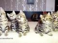 Świąteczny taniec kotków