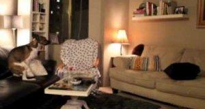 Samotny piesek szaleje po wyjściu swojej właścicielki