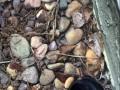 Ratowanie kaczuszki, która wpadła w wąską, metrową dziurę... odkurzaczem