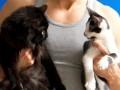 Jak ćwiczyć w domu ze swoim kotem