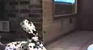 Gadające psy i koty