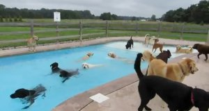 Psia balanga na basenie