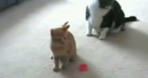 Szalony kot