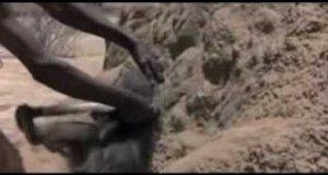 Jak za pomocą pawiana znaleźć wodę