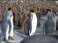 Walka pingwinów