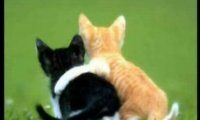 Śliczne kociaki