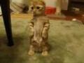 Kotek na łapkach