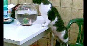 Smaczna rybka