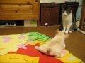 Kot vs szczeniak