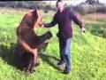 Sympatyczny i inteligentny niedźwiedź