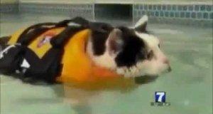 Kot, który lubi pływać