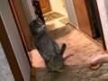 Kot oczekuje gości