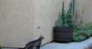 Wspinaczka kota