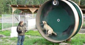 Pies czy chomik - oto jest pytanie