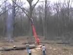 Jak pod żadnym pozorem nie ścinać drzew