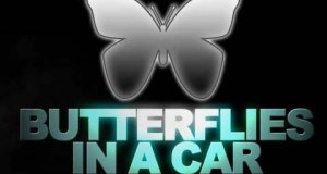 Motyle w samochodzie