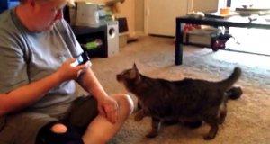 Mówię do ciebie kotku