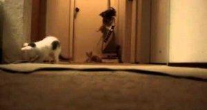 Ile kotów potrzeba do obsługi odkurzacza?