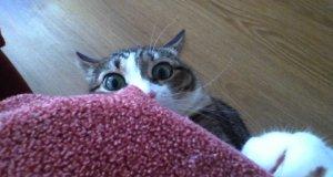 Pojedynek na spojrzenia z kotem