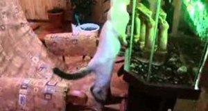 Kot, fotel bujany i akwarium