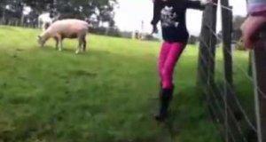 Zemsta owcy