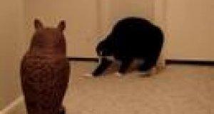 Kot vs sowa - kto wygra?