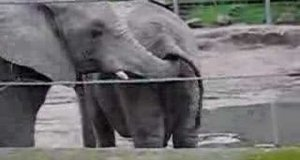 Zabawa słoni
