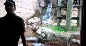 Niesamowicie wysportowana małpa szaleje w zoo