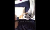 Pies, który bardzo chciał mieć selfie