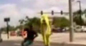 Żółty pies