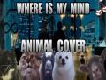 """Zwierzęca wersja """"Where Is My Mind"""""""
