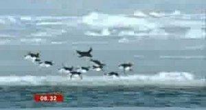 Latające pingwiny