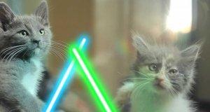 Koty Jedi