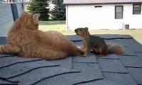 Wiewiórka po latach rozłąki odwiedza swojego przyjaciela kota