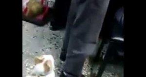 kot broni dziecka przed atakiem ojca