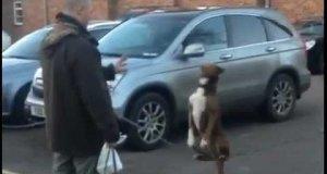 Pies balansujący na łańcuchu