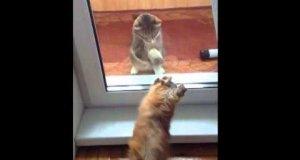 Wpuść mnie proszę!