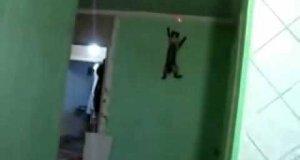 Kot pająk - Spider cat