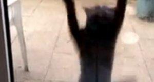 Kotek bardzo chce wejść