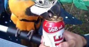 Papuga - największy przyjaciel faceta
