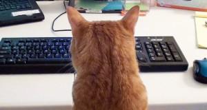 Praca przy komputerze, kiedy masz kota