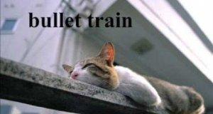Bekowe kociaki 2