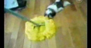 Psi mop