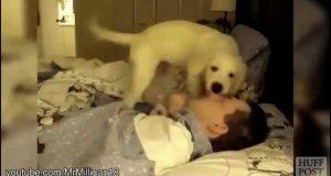 Psie budziki to najlepsze budziki na świecie
