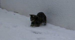 Kociak po raz pierwszy widzi śnieg