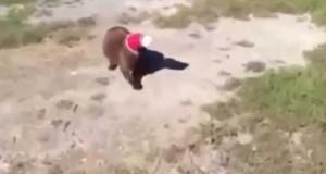 Pies pomaga kotu uwolnić głowę z kubka