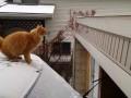 Kocia porażka na śniegu