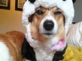 Pies przebrany za pandę