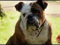 Ukryta kamera - wkręcanie psów